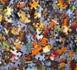 ¿Quieres formar parte de la comunidad Conciencia Global?