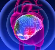 EL CAMINO DEL CORAZÓN (PARTE II): Despertar la inteligencia del corazón