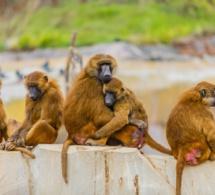 El mito del mono nº5 - El paradigma de la distopía