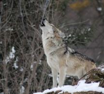 Covid-19: De nada sirve sólo limar los dientes al lobo