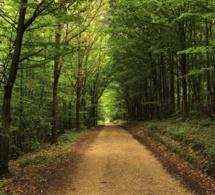 El Camino del Corazón: Volviendo la vista atrás