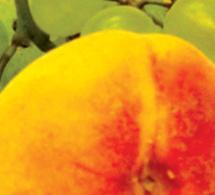 Otoño, la estación de las frutas